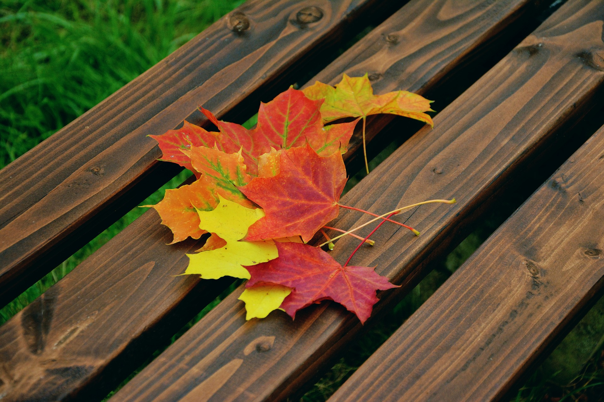 Autumn leaves on wood bench